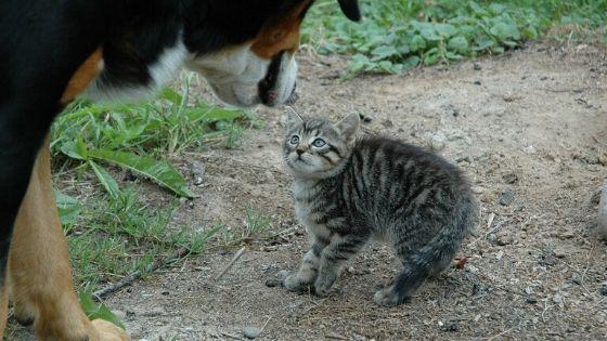 大きな犬に驚く子猫の写真