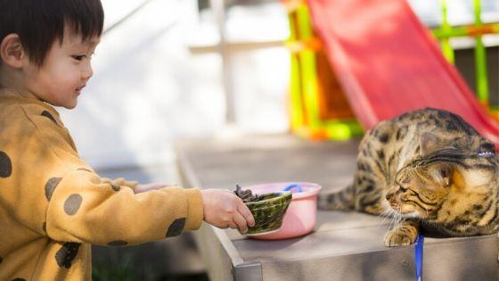 怖がる猫と子供の写真